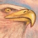 Tattoos - Bald Eagle - 19501